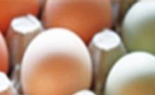 大连商品交易所鸡蛋期货合约