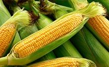 标准合约C 玉米