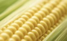 大连商品交易所玉米期货合约