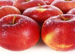郑州商品交易所鲜苹果期货合约