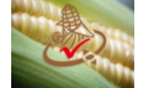 大连商品交易所玉米期货期权合约